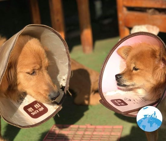 Shanghai Animal Rescue